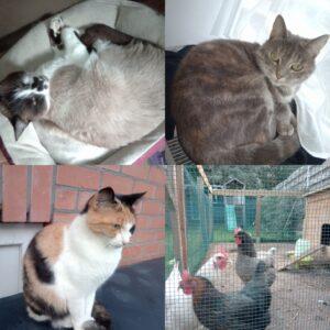 Een foto van onze diertjes : 3 katten en 3 kippen