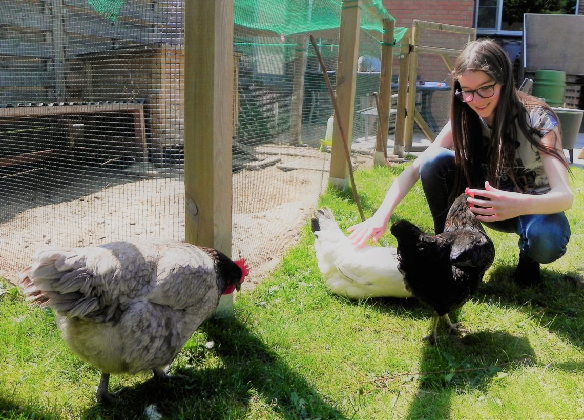 Meisje die kippen aait.