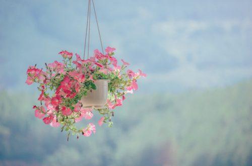 Minimalistische foto van roze bloemen.