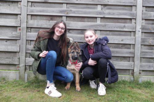 Kinderen sparen voor hond